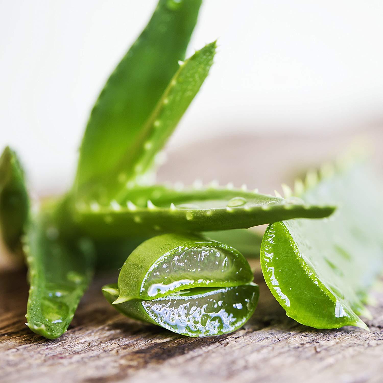Comment le jus d'aloe vera aide à favoriser la digestion